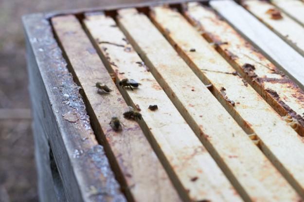 Bienenliebe Imkerausbildung tastesheriff.com