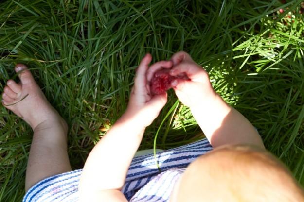 Fruechte des Sommers Stockseehof
